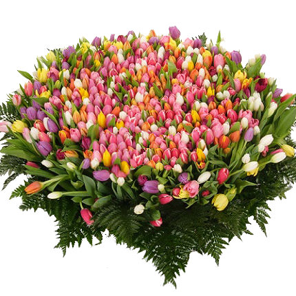 501 multi-colored tulip  - buy in Ukraine
