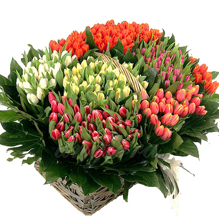 301 різнокольоровий тюльпан  - придбати в Україні