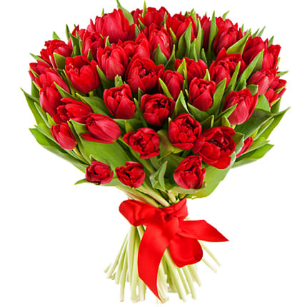 51 red tulip  - buy in Ukraine