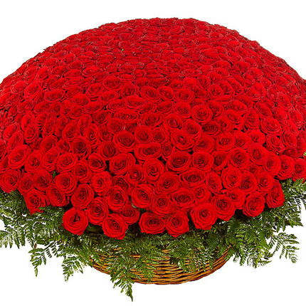 501 red roses  - buy in Ukraine