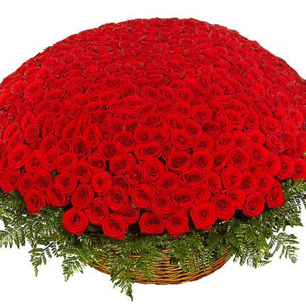 501 червона троянда  - придбати в Україні