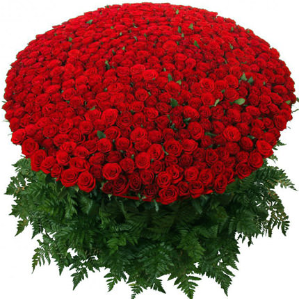 1000 roses!  - buy in Ukraine