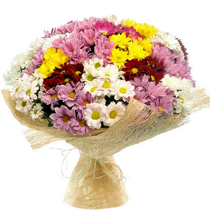 25  multi colored chrysanthemums  - buy in Ukraine