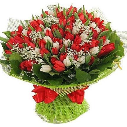 151 червоний і білий тюльпан  - придбати в Україні