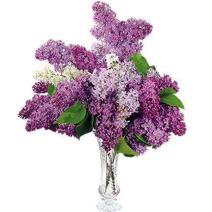 Bouquet of lilacs  - buy in Ukraine