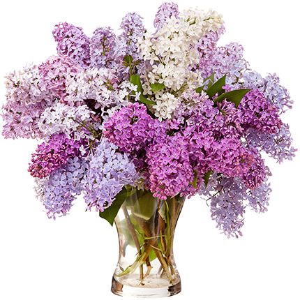 25 branches of fragrant lilacs  - buy in Ukraine