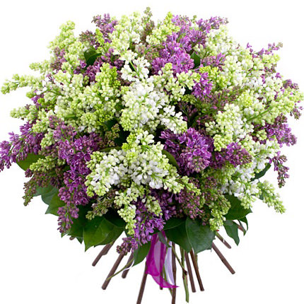 51 branch of lilac  - buy in Ukraine
