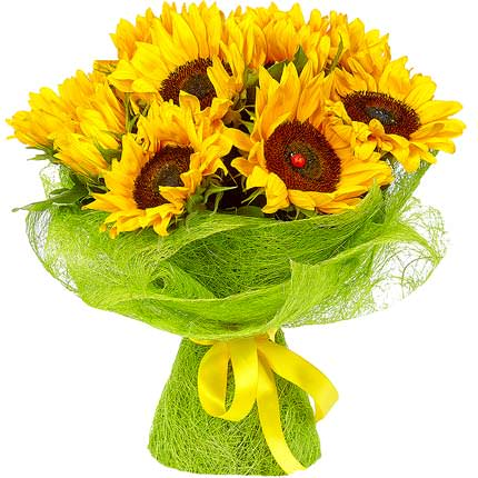 11 bright sunflowers  - buy in Ukraine