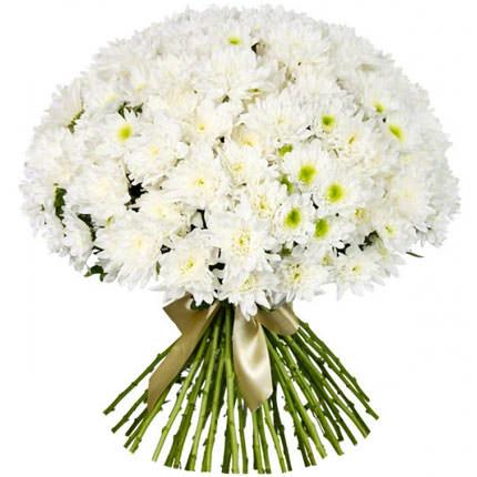 51 белая хризантема  - купить в Украине