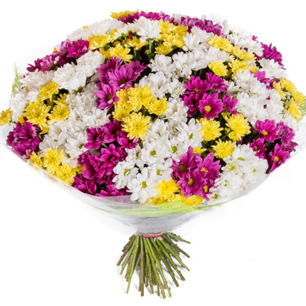51 multicolored chrysanthemums  - buy in Ukraine