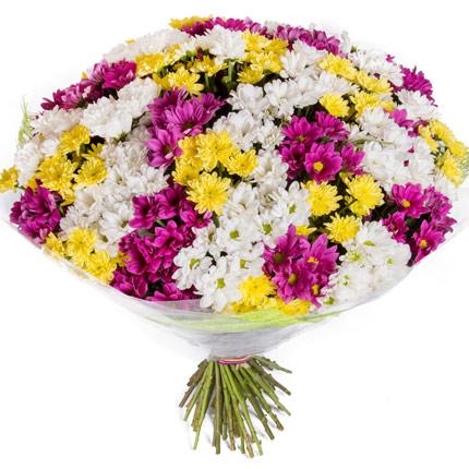 51 разноцветная хризантема  - купить в Украине