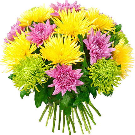 19 разноцветных хризантем  - купить в Украине