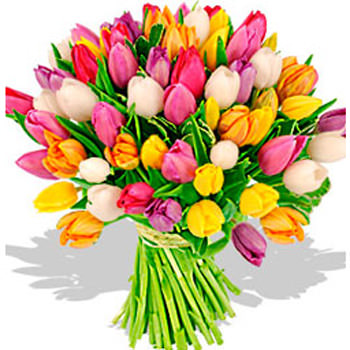 51 разноцветный тюльпан  - купить в Украине
