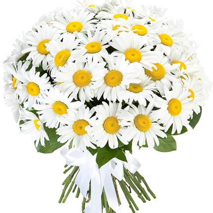 "Bouquet ""51 sunny chamomile""  - buy in Ukraine"