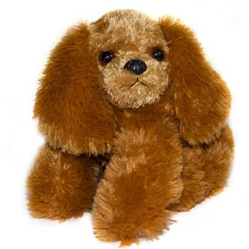 Puppy  - buy in Ukraine