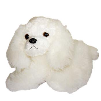 White puppy  - buy in Ukraine