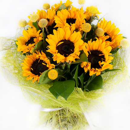 9 bright sunflowers  - buy in Ukraine