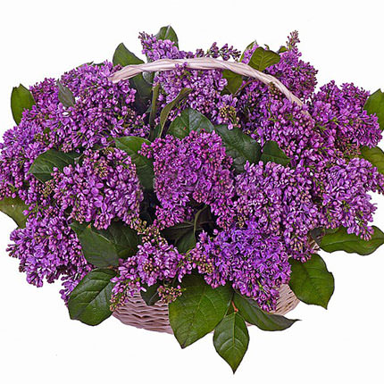 "Basket ""Aromatic lilac""  - buy in Ukraine"