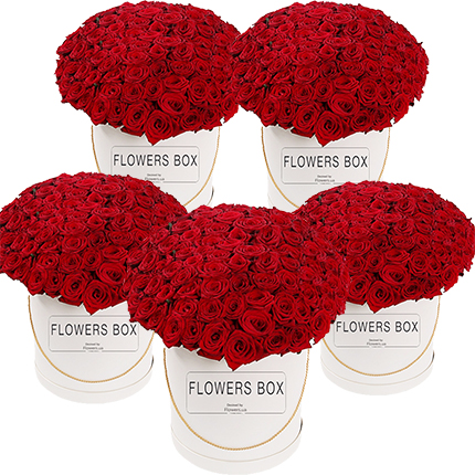1000 red roses!  - buy in Ukraine