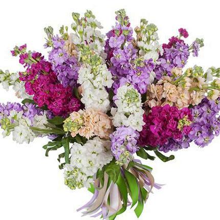 25 branches of multicolored mattiola  - buy in Ukraine