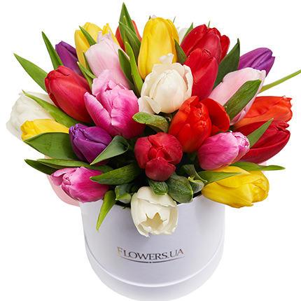 "Flowers in the box ""25 colorful tulips""  - buy in Ukraine"