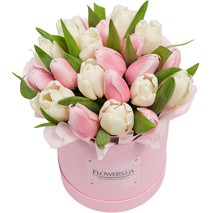 "Flowers in a box ""25 white and pink tulip""  - buy in Ukraine"