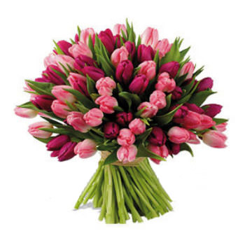 101 red and pink tulips  - buy in Ukraine