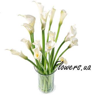 Bouquet of calla lilies  - buy in Ukraine