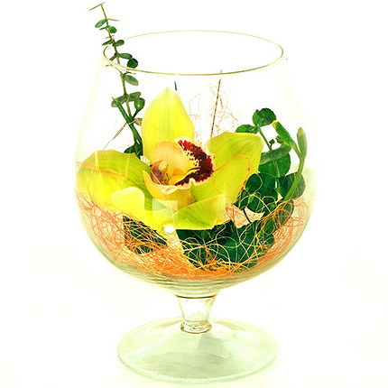 Orchid in a glass  - buy in Ukraine