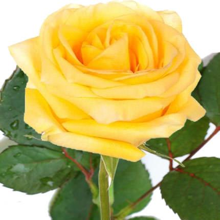 Роза желтая (поштучно)  - купить в Украине