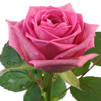 Роза розовая (поштучно)  - купить в Украине