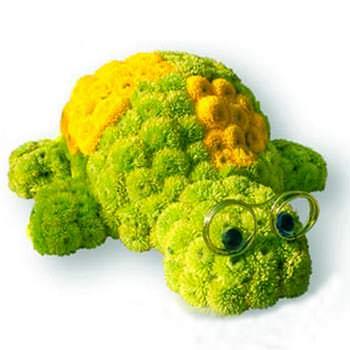 Черепаха Тортилла  - купить в Украине