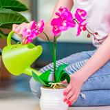 Як правильно доглядати за орхідеями
