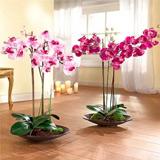 Як правильно пересадити орхідею