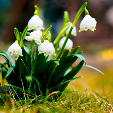 Весенние цветы, которые растут в Украине
