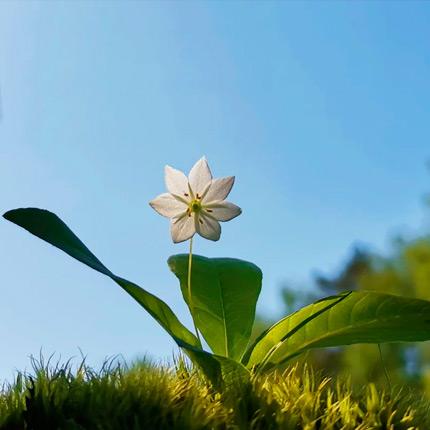 Какие меры нужно предпринять для сохранения первоцветов