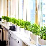 Цветы и растения для офиса: украшаем рабочее пространство