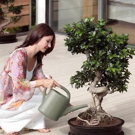 Почва и полив