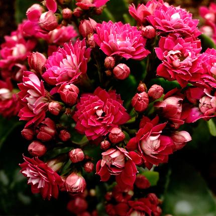 Как стимулировать цветение