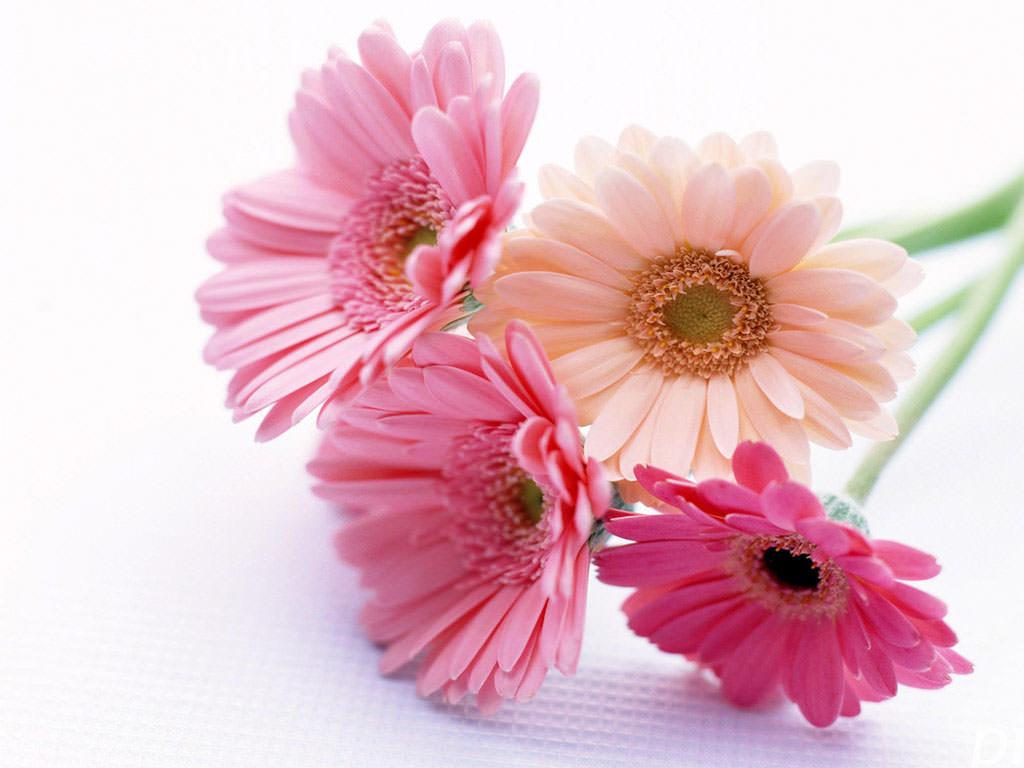 нечетного количества цветов живым