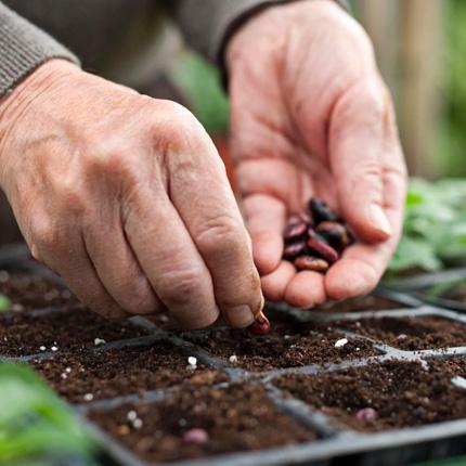 Что лучше всего посадить на огороде весной и после заморозков