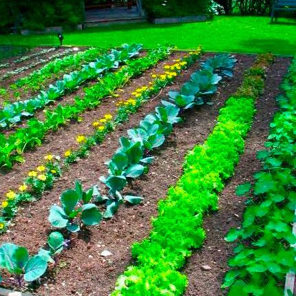 Как правильно расположить овощи