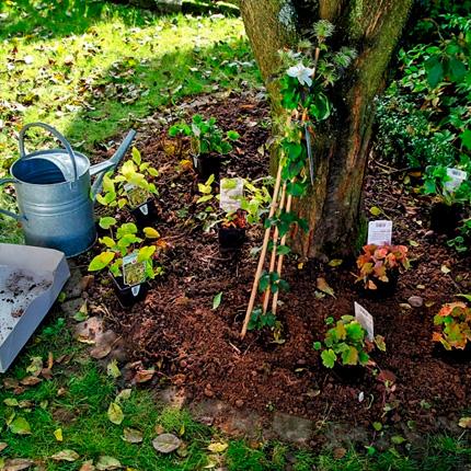 Какие овощи можно посадить под деревьями (в тени)