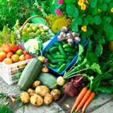 Что посадить на огороде: список популярных овощей, фруктов и ягод