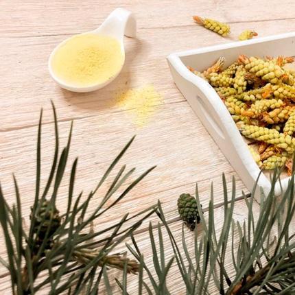 Применение сосновой пыльцы