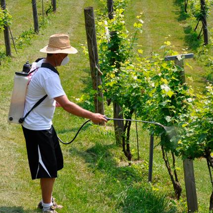 Уход за виноградом после пересадки
