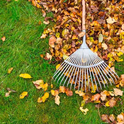 Что делать с листвой