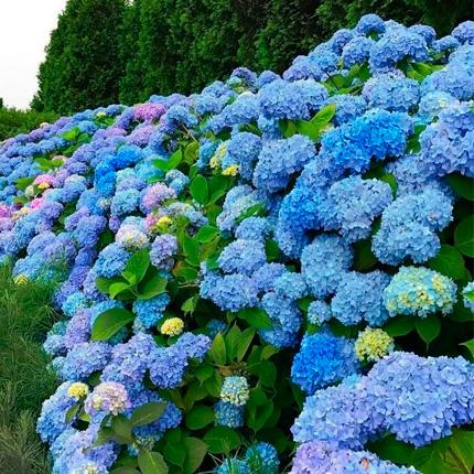 Топ голубых и синих цветов
