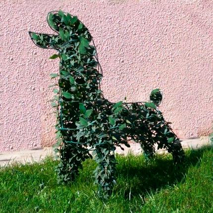 Использование плюща садового в ландшафтном дизайне