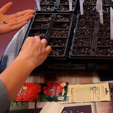 Как и когда посадить